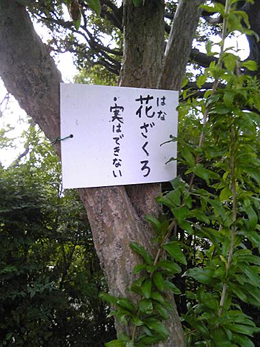 hanazakuro.jpg